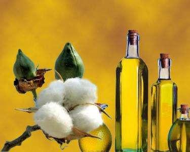 Estudio sobre el proceso de refinación del aceite de semilla de algodón.