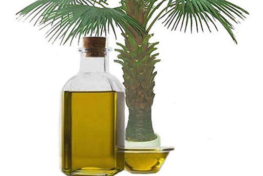El rol de tabla corta de aceite de palma continúa pero se enfrenta a una mejora (2)