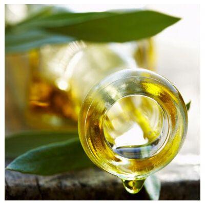 Bioactividad y aplicación del aceite de semilla de camelia.
